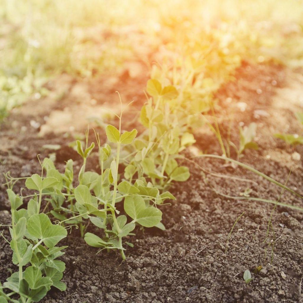 agricoltura pranica terreno